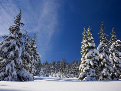 Haute Savoie - neige sapin